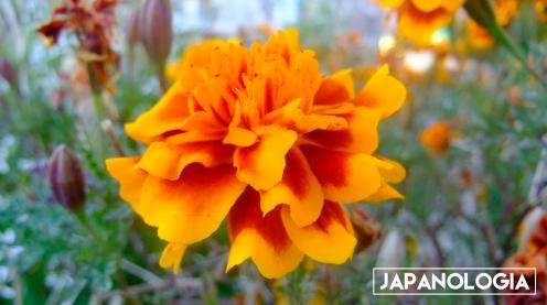 Flower, Act Street - Hamamatsu, Shizuoka